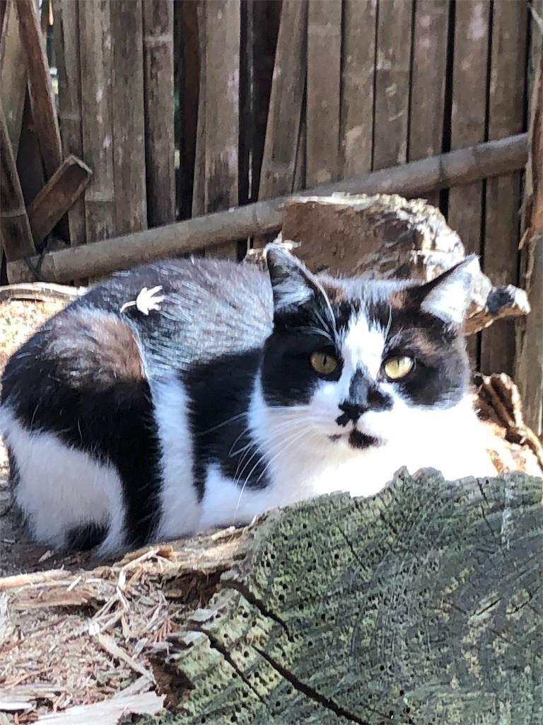 f:id:lovecats:20190320202635j:image