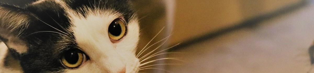 f:id:lovecats:20200723195523j:plain