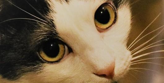 f:id:lovecats:20200723195526j:plain