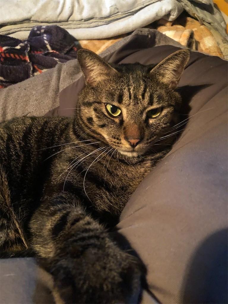 f:id:lovecats:20201130165711j:image