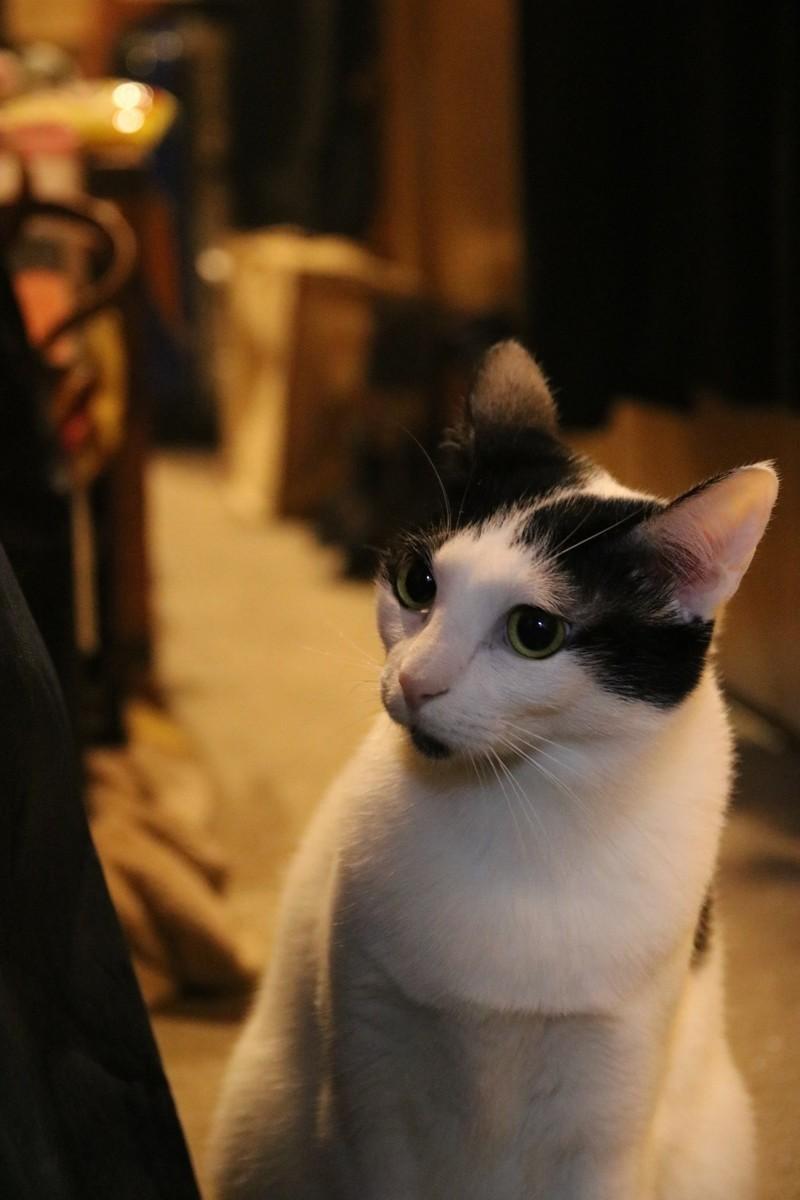 f:id:lovecats:20201217130956j:plain