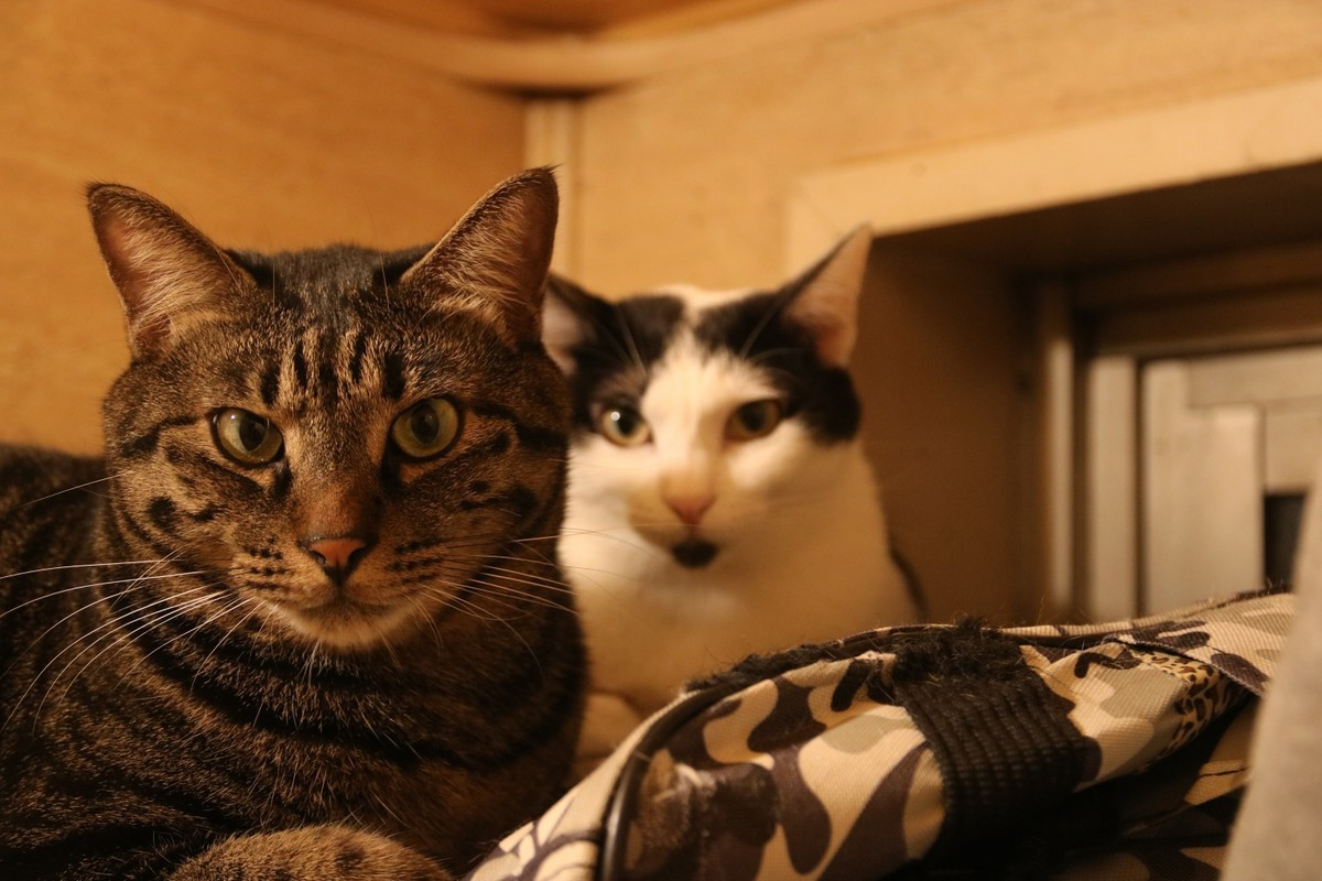 f:id:lovecats:20201218141735j:plain
