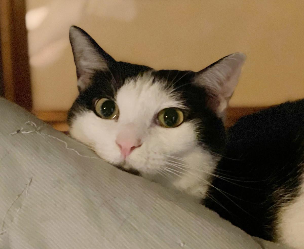 f:id:lovecats:20210702130701j:plain