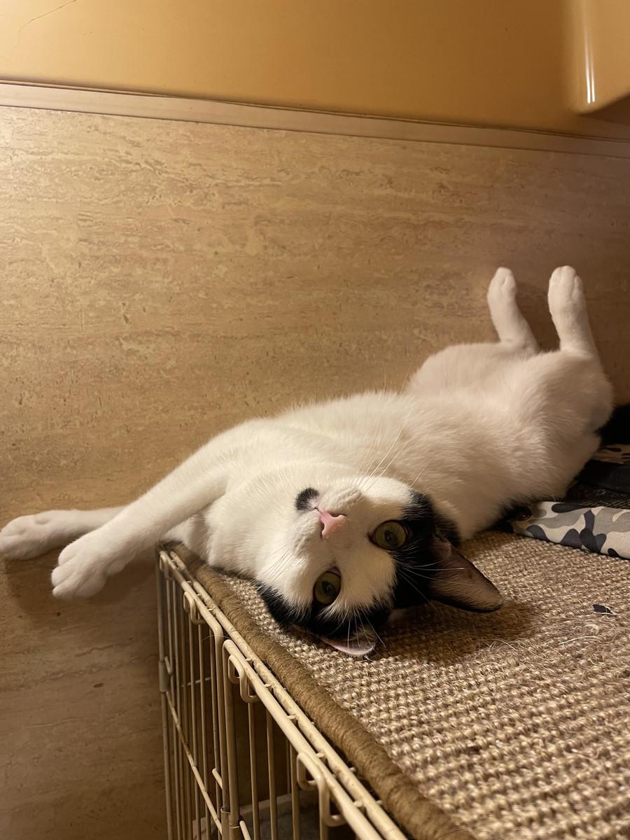 f:id:lovecats:20210712164703j:plain