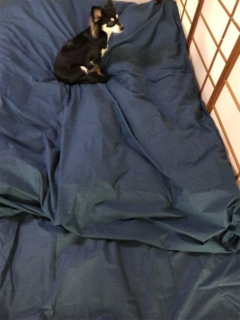 お布団と愛犬マロン