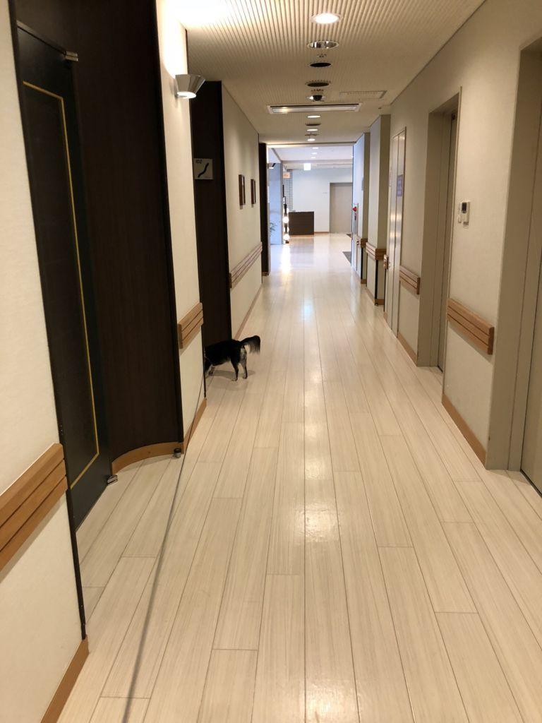 愛犬お宿 廊下