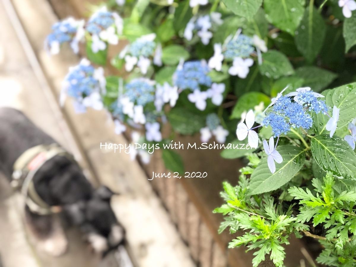f:id:lovelyanzu:20200602194525j:plain