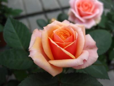 f:id:lovesongxxx:20090517141932j:image