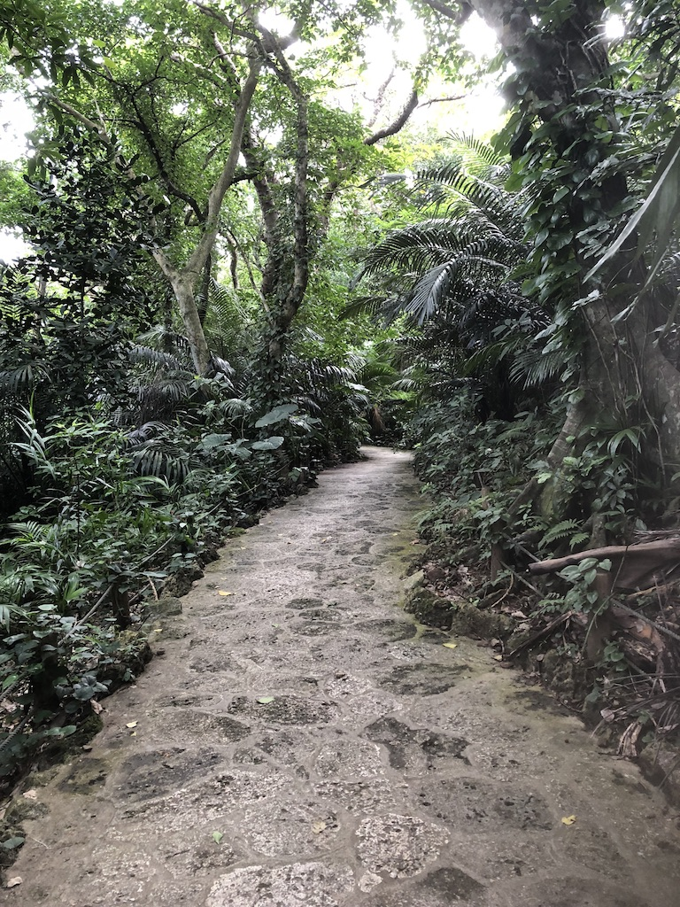 Yaeyama Palm Colony