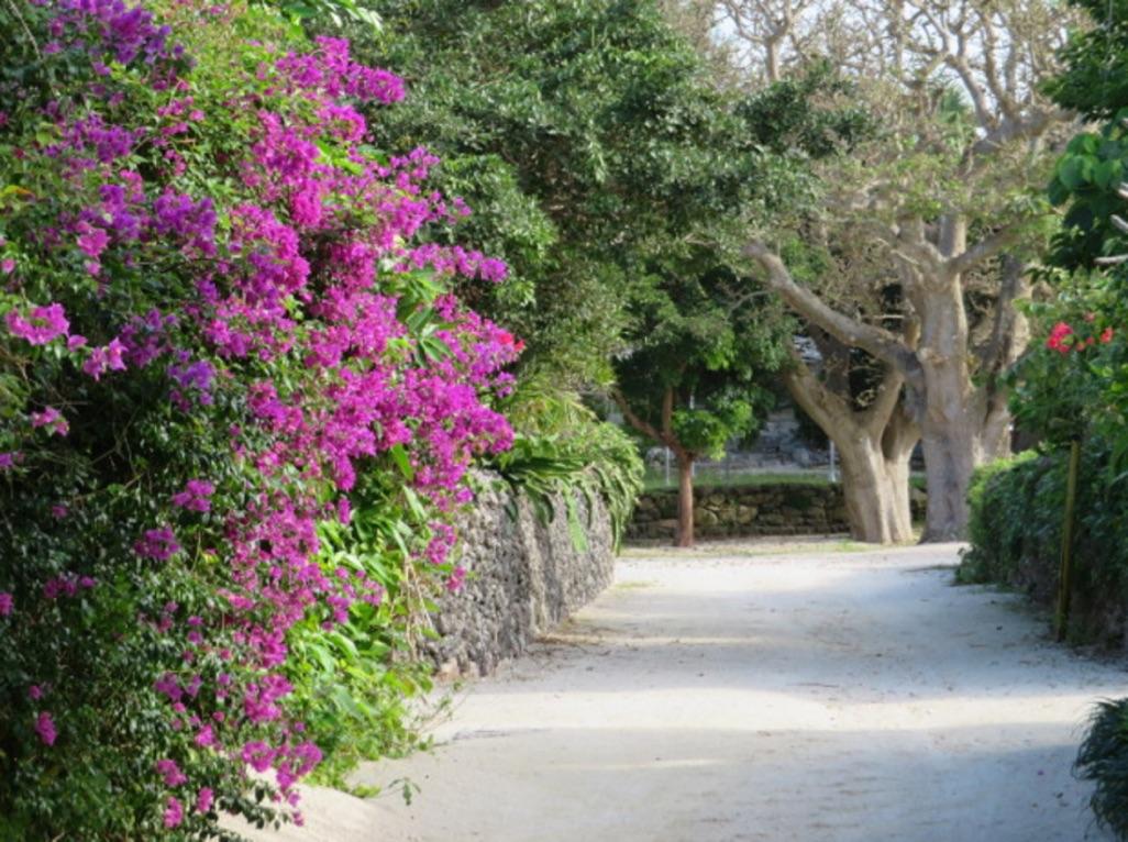 ブーゲンビリアの咲く竹富島の町