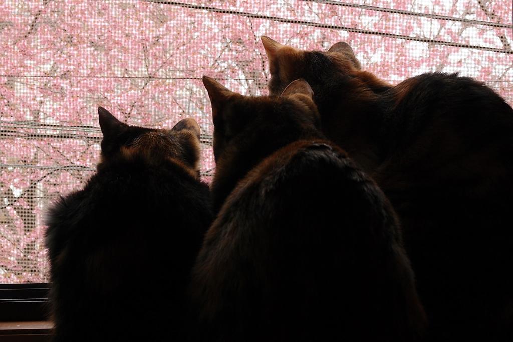 お花見をしているかのような猫三匹