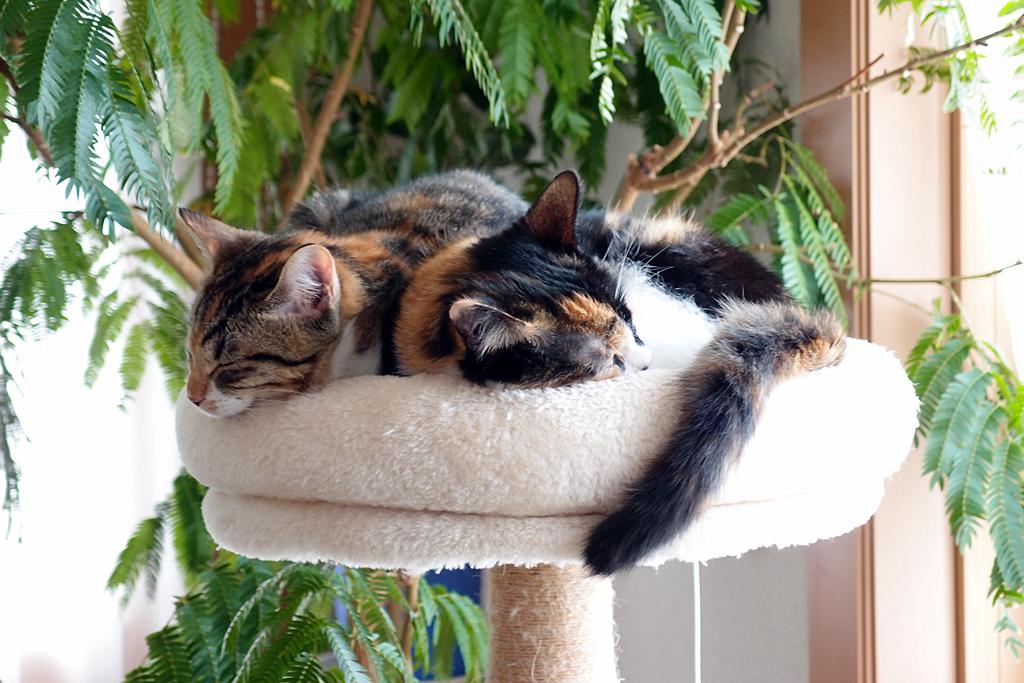 保護猫の姉妹「さき」「きき」