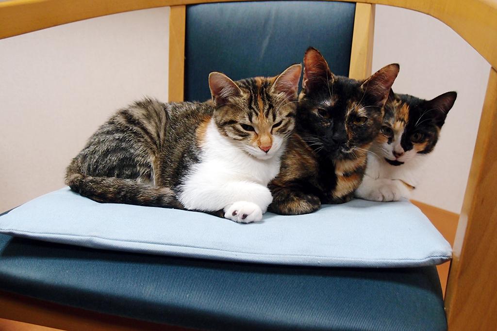 1歳未満の三匹の猫団子