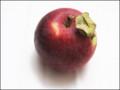 Secret Life of Apples