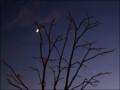 [Moon][Venus][Jupiter]