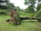 [Central Park][Trees][Storm]