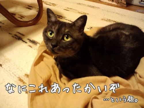 f:id:luvpuku:20101117153222j:image
