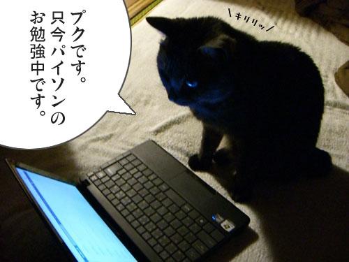 f:id:luvpuku:20110514140653j:image