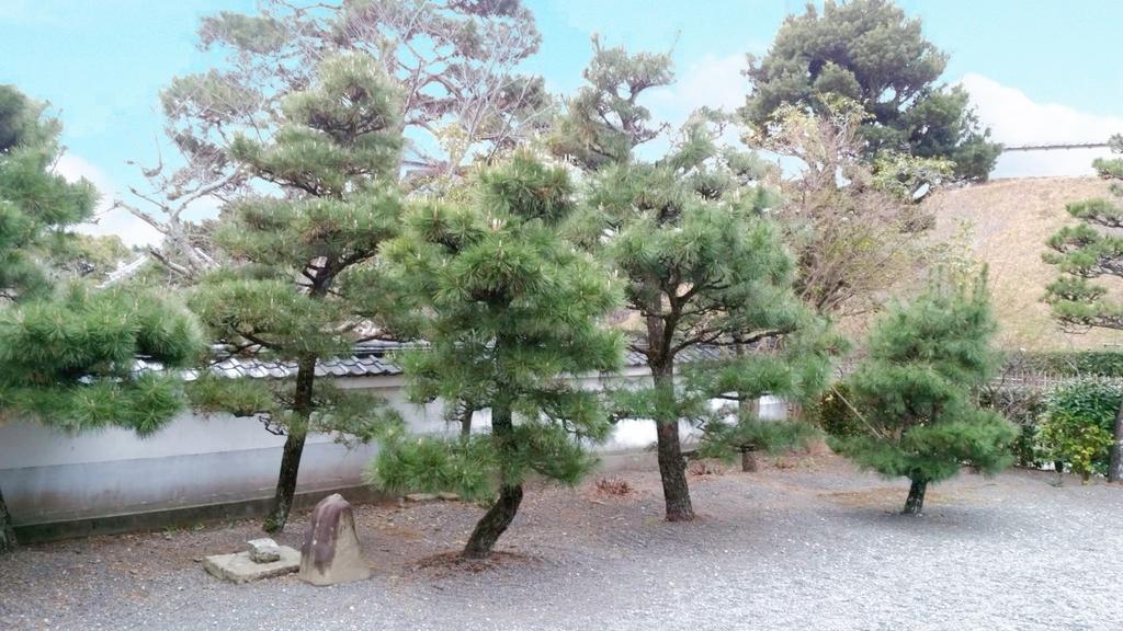 松林の庭園