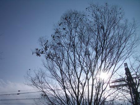 今日も冬らしい空。