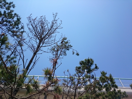 トンビ野郎は木の上へ・・・