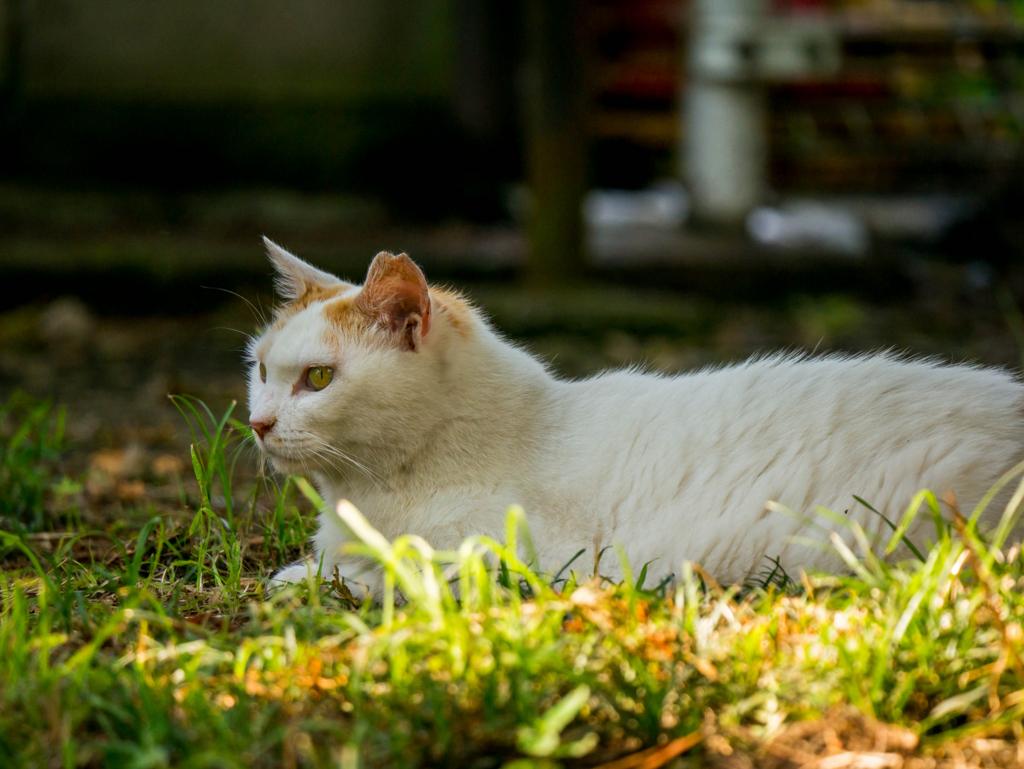 超望遠レンズで撮った猫の写真