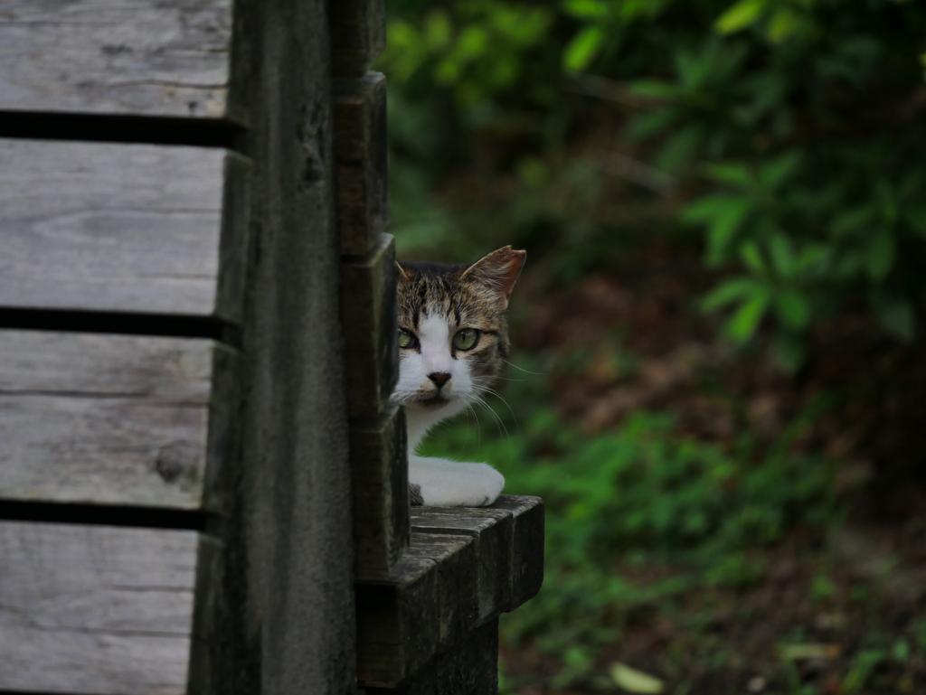 善福寺川緑地の猫