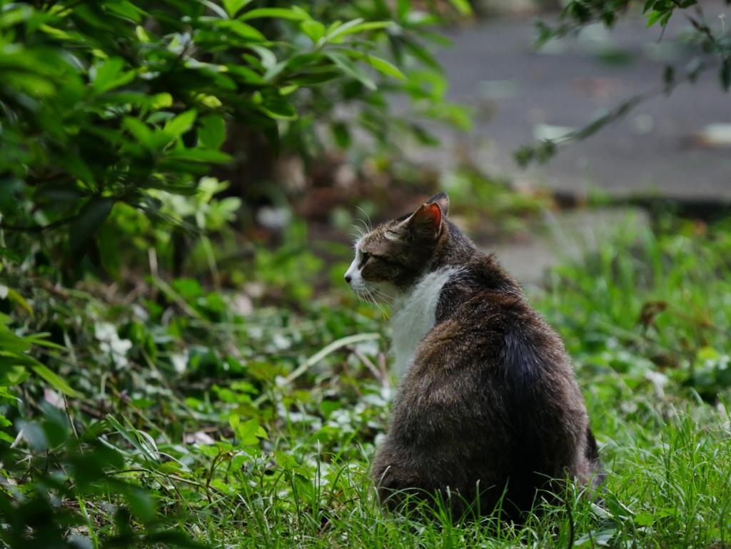 草むらを散策する猫