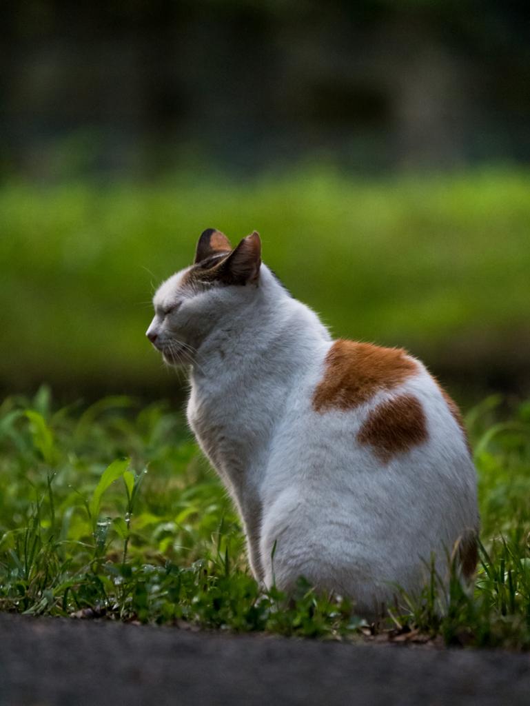 目を瞑る猫