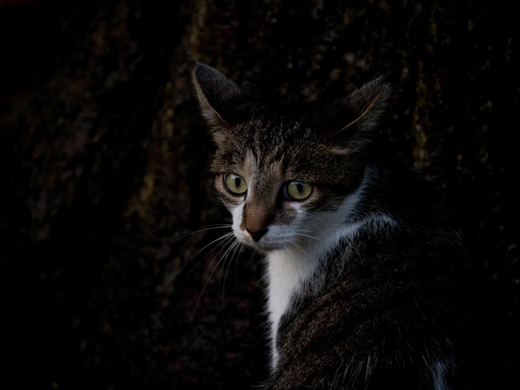 困ったような表情の猫