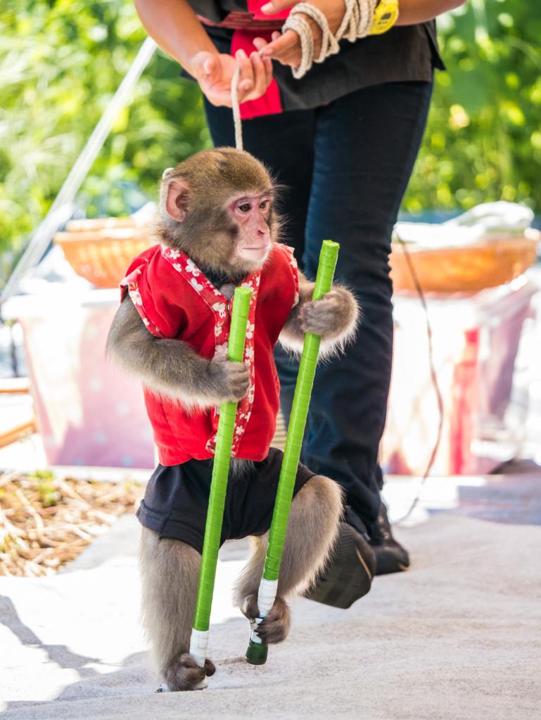竹馬に乗る猿