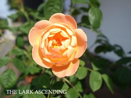 f:id:m-garden-life:20150511085953j:plain