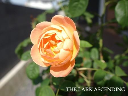 f:id:m-garden-life:20150511085957j:plain