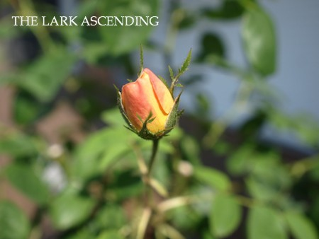 f:id:m-garden-life:20150511090021j:plain