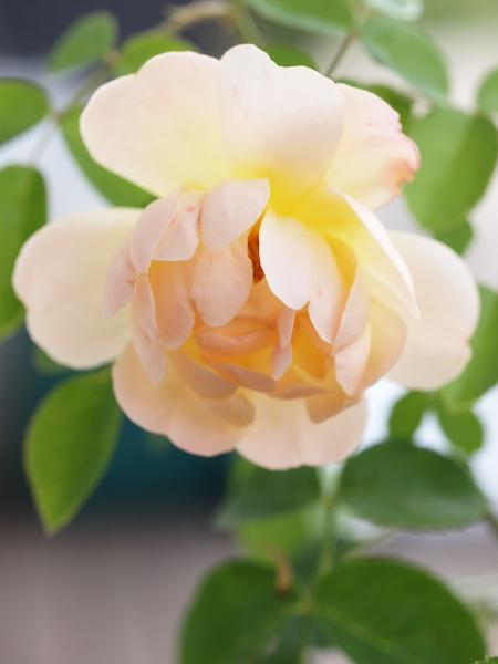 f:id:m-garden-life:20150607070045j:plain
