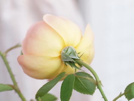 f:id:m-garden-life:20150607070705j:plain