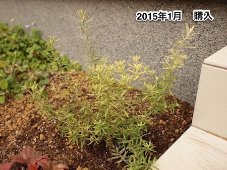 f:id:m-garden-life:20150707090735j:plain