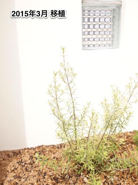 f:id:m-garden-life:20150707090744j:plain