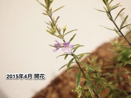 f:id:m-garden-life:20150707090759j:plain