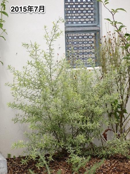 f:id:m-garden-life:20150707090809j:plain
