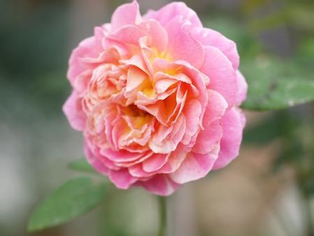 f:id:m-garden-life:20150709172852j:plain