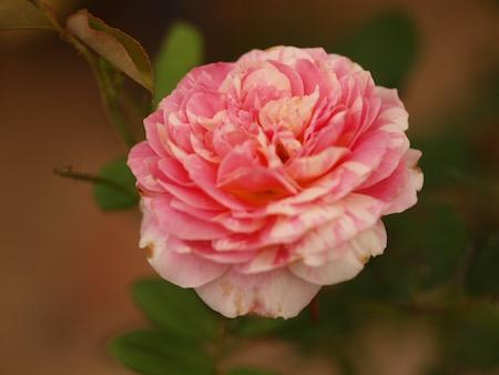 f:id:m-garden-life:20150726155217j:plain