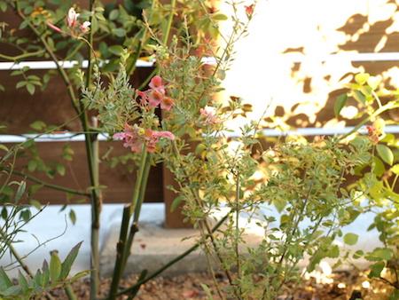 f:id:m-garden-life:20151007171657j:plain