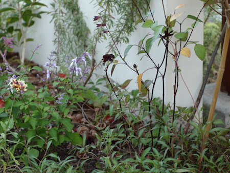 f:id:m-garden-life:20151007171741j:plain