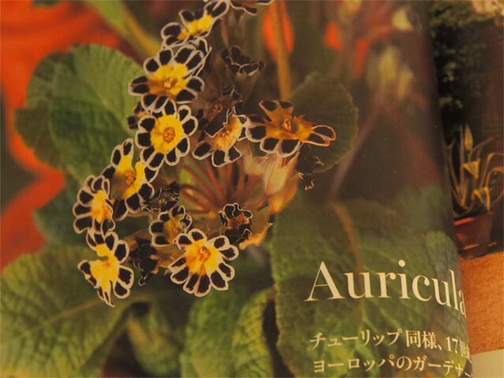 f:id:m-garden-life:20151122153630j:image