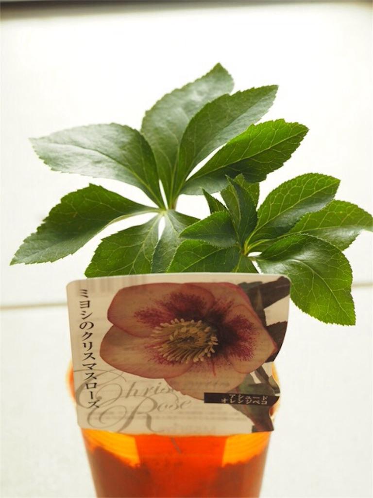 f:id:m-garden-life:20151122154237j:image