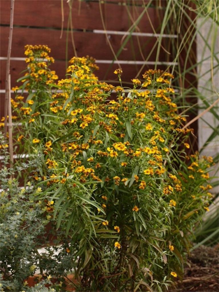 f:id:m-garden-life:20151206131154j:image
