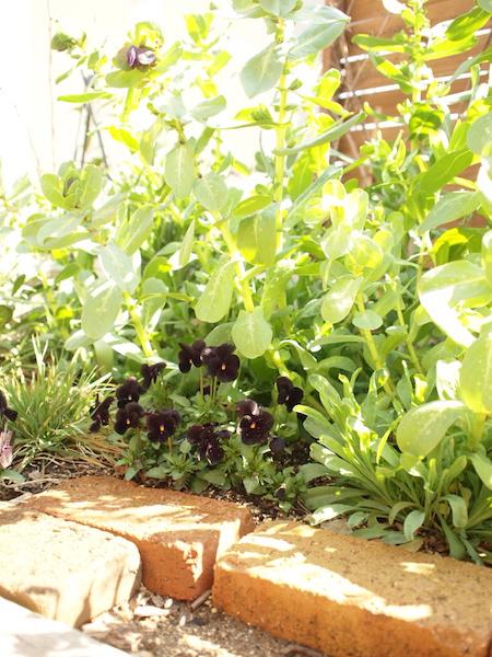 f:id:m-garden-life:20160317115817j:plain