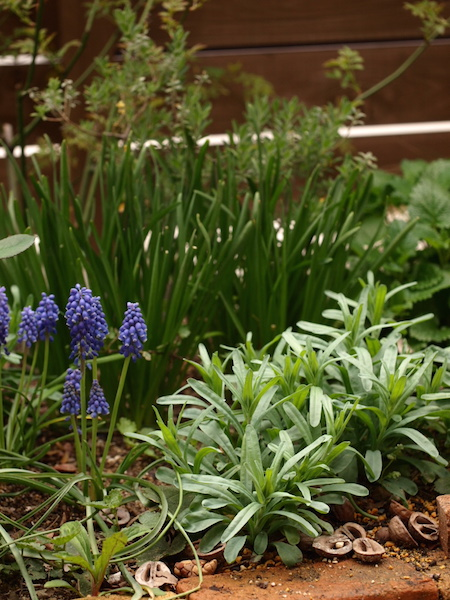 f:id:m-garden-life:20160403113014j:plain