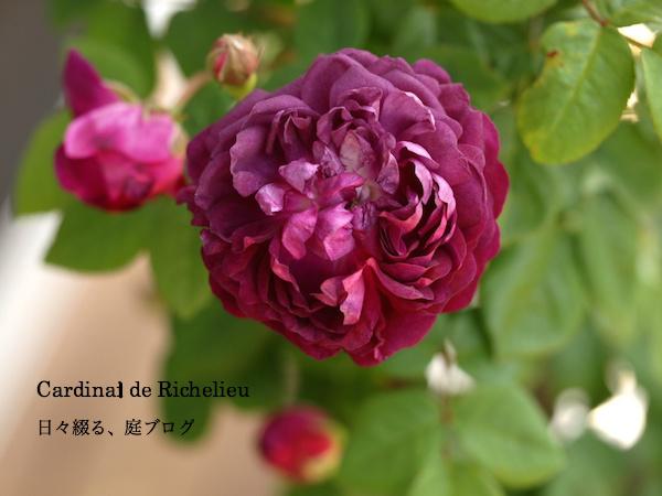 f:id:m-garden-life:20160501102046j:plain